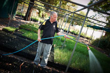 Francis's passion for gardening makes him a valuable team member at the Moorabbin Community Plant Nursery